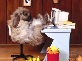 bunnycomputer.jpg